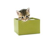 Grijs katje in groene doos Stock Afbeeldingen