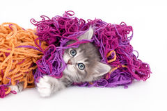 Grijs katje met kleurrijke wol Royalty-vrije Stock Foto