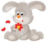 Grijs konijn Stock Afbeelding