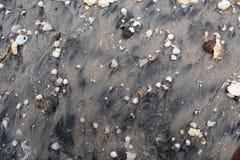 Grijs nat zand met shells van diverse kleuren en grootte stock fotografie