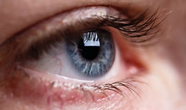 Grijs oog macroschot Stock Fotografie