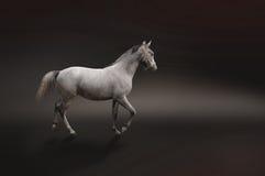 Grijs paard dat op zwarte wordt geïsoleerdn Stock Afbeeldingen