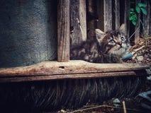 Grijs pluizig katje op een oude bezemsteel Stock Foto's