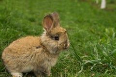Grijs weinig konijnclose-up die zich in het gras bevinden Royalty-vrije Stock Afbeelding