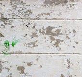 Grijs-witte ruwe abstracte gipspleistertextuur voor achtergrond Royalty-vrije Stock Foto's