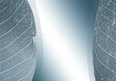Grijze achtergrond met bladeren Stock Foto's