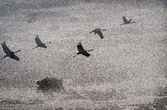 Grijze achtergrond met het beeld lyatyashchikh van vogels Royalty-vrije Stock Fotografie