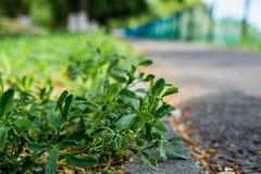 Grijze bedekte weg met een metaalomheining op de rand Anderzijds groene bomen met vergoelijkte boomstammen, in het Park, in de le stock foto's