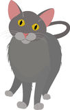Grijze beeldverhaal binnenlandse kat, met gele die ogen op wit worden geïsoleerd Stock Foto
