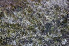 Grijze bemoste steentextuur met kleine krassen stock afbeelding