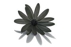 Grijze bloem Royalty-vrije Stock Afbeeldingen