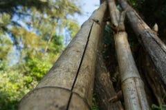 Grijze boomstammen van het oude bamboe Japanse poëzie Stock Foto