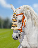 Grijze $ce-andalusisch paard Spaanse decoratie Royalty-vrije Stock Afbeeldingen