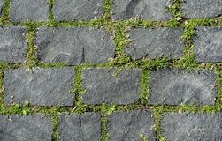 Grijze coble steenachtergrond Sluit omhoog hoogste mening van monotone grijze baksteensteen Stoep of bestrating met groen gras stock afbeelding