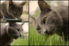 Grijze de mengelingscollage van het kattenmozaïek Stock Afbeelding