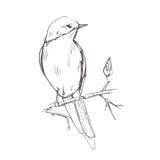 Grijze de schets vectorillustratie van het vogelpotlood Stock Afbeelding