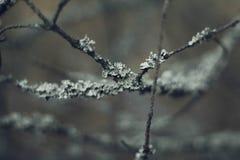 Grijze die boomtakken met mos in bos Dichte omhooggaand worden behandeld Mooi mos op de takken De boom in het mos stock foto's