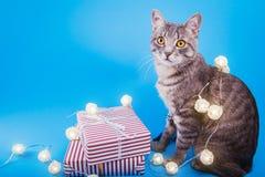 Grijze die gestreepte katkat met giftdozen wordt en met een slinger op blauwe achtergrond wordt behandeld omringd die royalty-vrije stock foto