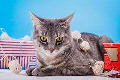 Grijze die gestreepte katkat met giftdozen wordt en met een slinger op blauwe achtergrond wordt behandeld omringd die stock foto's