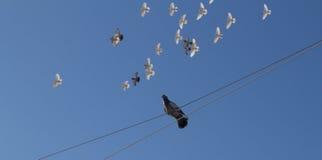 Grijze duifzitting op een kabel Stock Fotografie