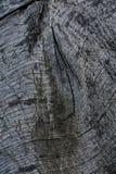 Grijze eiken bankoppervlakte met gnarts Stock Foto
