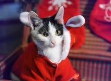 Grijze en witte kat in een kostuum van de Nieuwjaar` s maskerade van Santa Claus met oren in retro koffer De gelukkige jonge zakk stock foto's