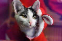 Grijze en witte kat in een kostuum van de Nieuwjaar` s maskerade van Santa Claus met oren in retro koffer De gelukkige jonge zakk royalty-vrije stock foto