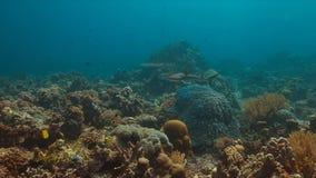 Grijze ertsaderhaai op een koraalrif Stock Foto's