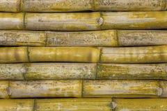 Grijze geelgroene droge omheiningsmuur van bamboeboomstammen Horizontale lijnen natuurlijke oppervlaktetextuur royalty-vrije stock afbeeldingen