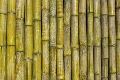 Grijze geelgroene droge omheiningsmuur van bamboeboomstammen Verticale lijnen natuurlijke oppervlaktetextuur stock afbeeldingen