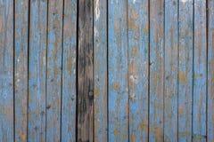 Grijze gele oude omheiningsmuur van houten planken met blauwe schilverf en barsten en één donkere raad Verticale lijnen Ruwe oppe stock foto