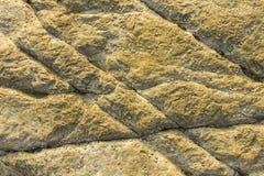 Grijze gele rots met grote barsten en zeeschelpen ruwe natuurlijke textuuroppervlakte stock afbeelding