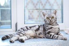 Grijze gestreepte kat die op de vensterbank liggen royalty-vrije stock foto