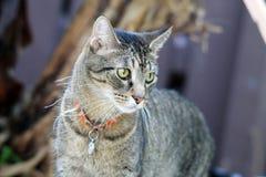Grijze gestreepte katkat in tuin Stock Afbeeldingen