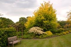 Grijze hemel en gele bomen Stock Afbeeldingen