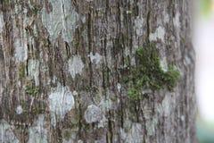 Grijze houten textuur met mos royalty-vrije stock foto's