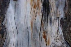 Grijze houten textuur van droog oud hout met zwarte barsten stock fotografie