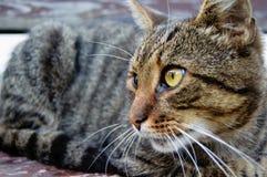 Grijze kat die op het gras letten stock fotografie