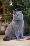 Grijze kat onder nieuwe jaarboom Stock Afbeelding