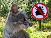 Grijze kat op de achtergrond van teken geen vliegen en groen gras royalty-vrije stock afbeeldingen