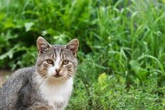 Grijze kat op een achtergrond van gras royalty-vrije stock foto