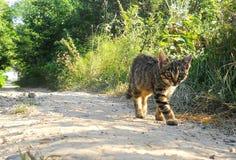 Grijze kat op een gang stock foto