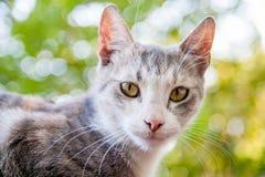 grijze kat op groene achtergrond Stock Afbeeldingen