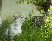 Grijze kat in tuin dichtbij boom en omhoog het kijken Stock Fotografie