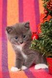 Grijze katje en decoratie Stock Afbeelding