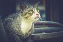 Grijze kattenzitting en omhoog het kijken Stock Afbeelding