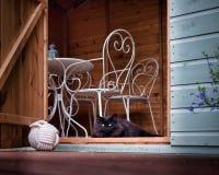 Grijze kattenzitting in summerhouse stock foto