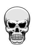 Grijze menselijke schedel op wit Stock Afbeeldingen