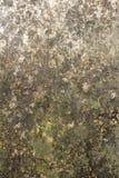 Grijze muur met vochtigheid en vormtextuur stock fotografie