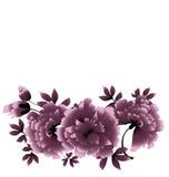 Grijze pioenbloem Royalty-vrije Stock Afbeelding